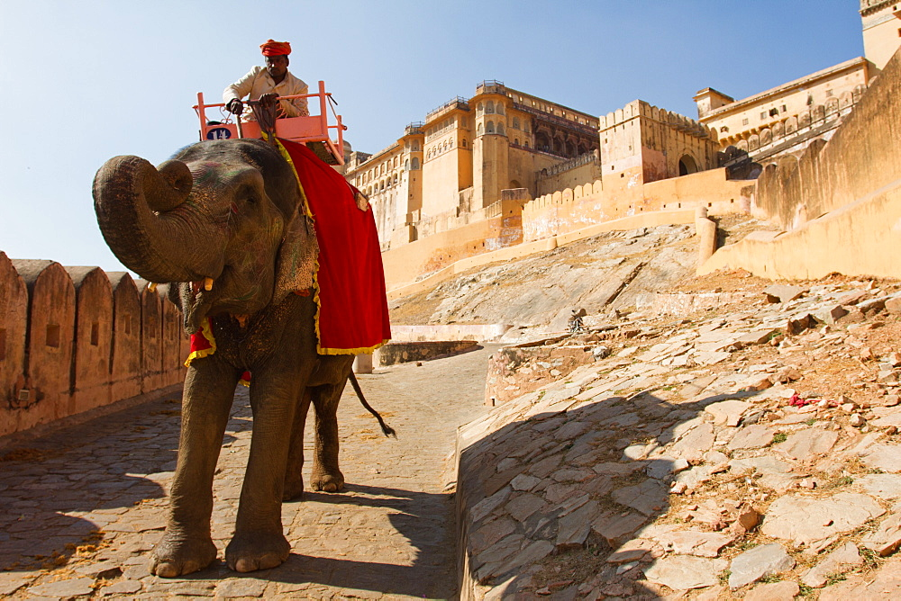 An elephant and its rider walk the walls of the Amber Fort, Jaipur, India