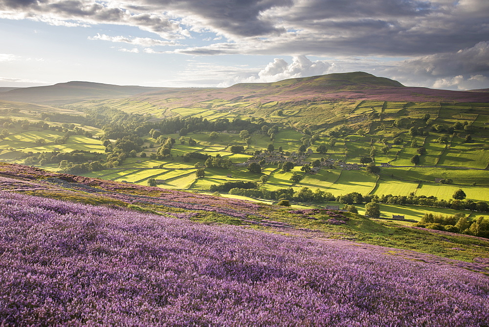 Helaugh Village and Calver Hill photographed from amongst the colourful heather on Grinton Moor, Swaledale, Yorkshire Dales, Yorkshire, England, United Kingdom, Europe - 1266-29