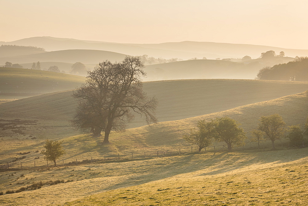 Rolling countryside and hills illuminated by the first light of the day near Skipton, North Yorkshire, Yorkshire, England, United Kingdom, Europe - 1266-7