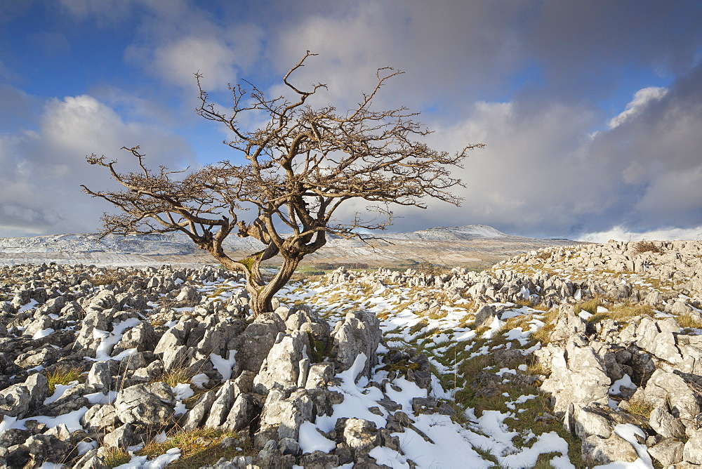 View to Whernside Hill from Limestone pavement at Ravens Scar above Southerscales Nature Reserve, Yorkshire Dales, North Yorkshire, Yorkshire, England, United Kingdom, Europe - 1266-72