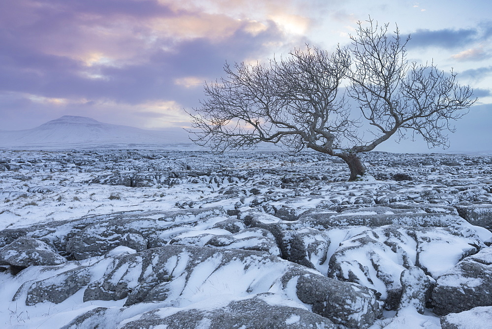 View to Ingleborough Hill from Twisleton Scar at sunrise in winter, Ingleton, Yorkshire Dales National Park, North Yorkshire, Yorkshire, England, United Kingdom, Europe - 1266-74