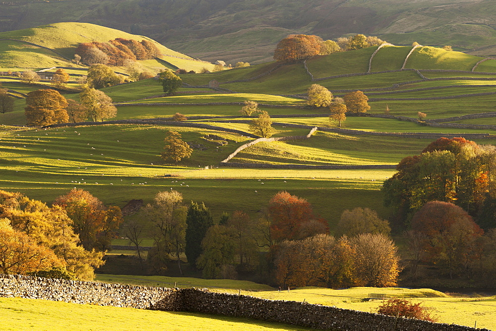 Sunlit fields, hillside and autumn colour close to Grassington, Wharfedale, Yorkshire Dales National Park, North Yorkshire, UK - 1266-75