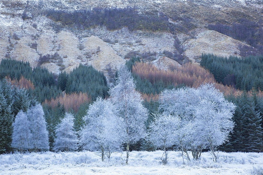 Hoar frosted trees in winter at Glen Orchy, Argyll and Bute, Highlands, Scotland, United Kingdom, Europe - 1266-8