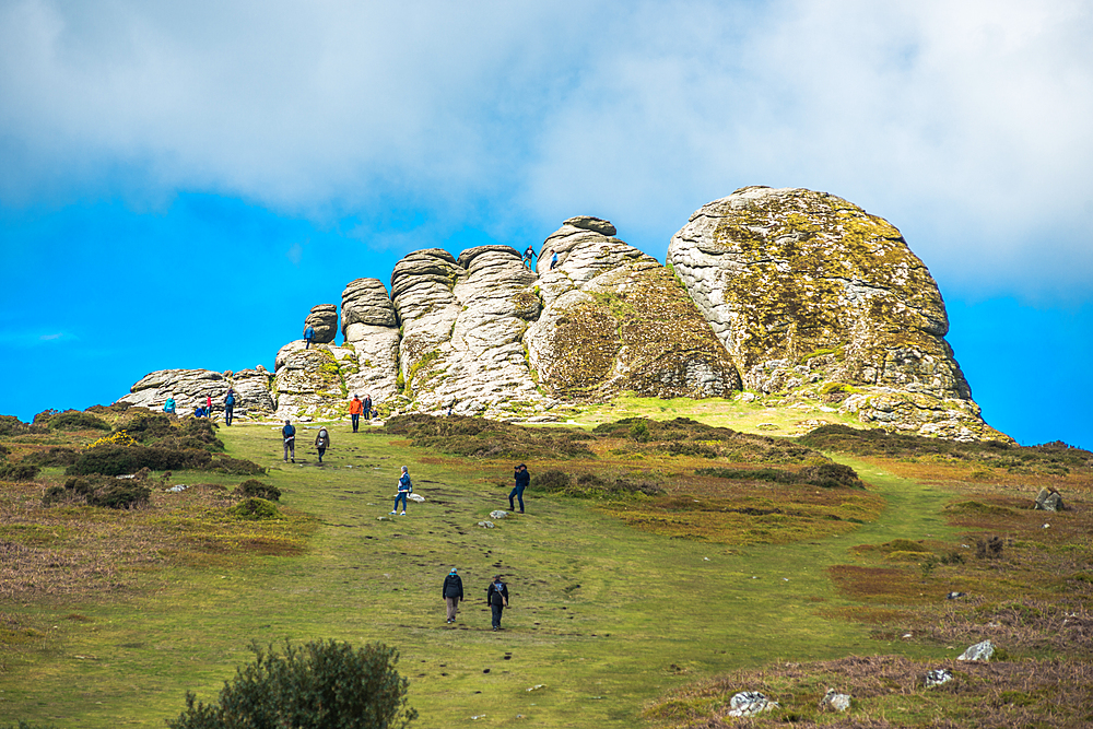 Haytor Rocks, Ilsington, Dartmoor National Park, Devon, England, United Kingdom, Europe - 1267-441