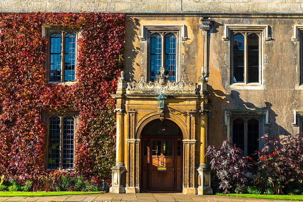 Ivy on the walls of Trinity College, Cambridge University, Cambridge, Cambridgeshire, England, United Kingdom, Europe