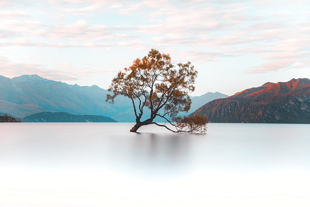 That Wanaka Tree, Wanaka, Otago, South Island, New Zealand, Pacific
