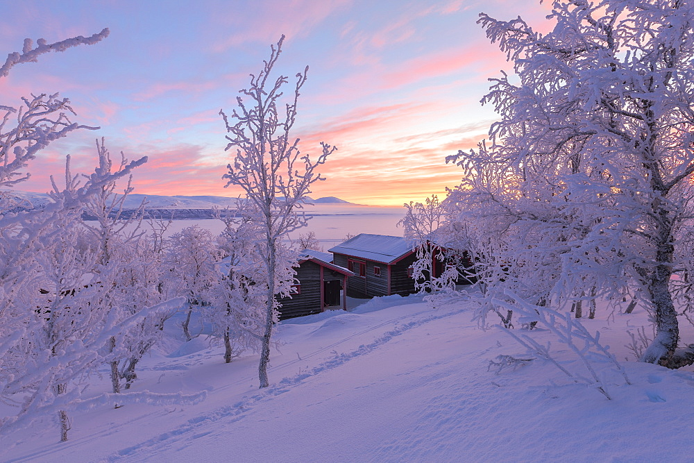 Dawn light illuminates a lonely house in the snow-covered forest, Bjorkliden, Norbottens Ian, Sweden, Scandinavia, Europe - 1269-10