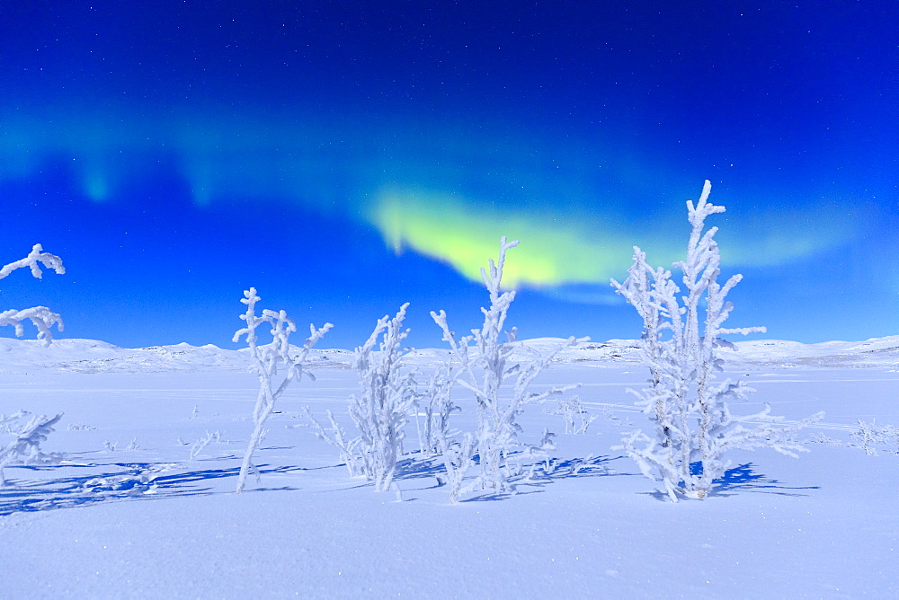 Northern lights turn green the night sky lit by the full moon, Riskgransen, Norbottens Ian, Lapland, Sweden, Scandinavia, Europe