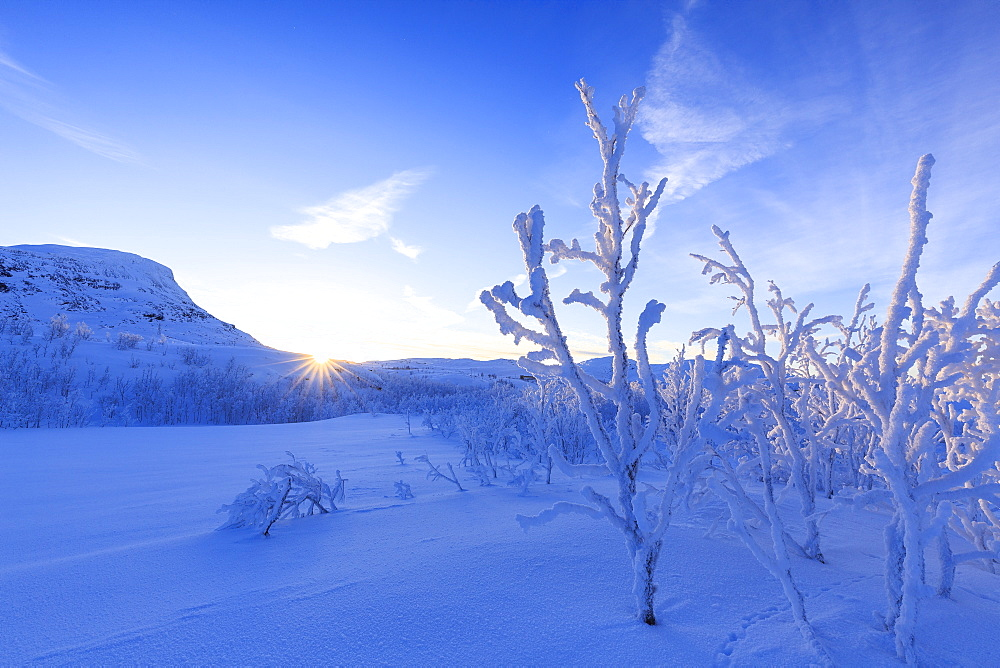 Last sun on frost plants, Riskgransen, Norbottens Ian, Lapland, Sweden, Scandinavia, Europe - 1269-17
