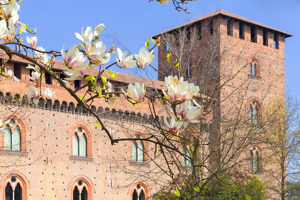 Spring at Castello Visconteo(Visconti Castle). Pavia, Pavia province, Lombardy, Italy, Europe