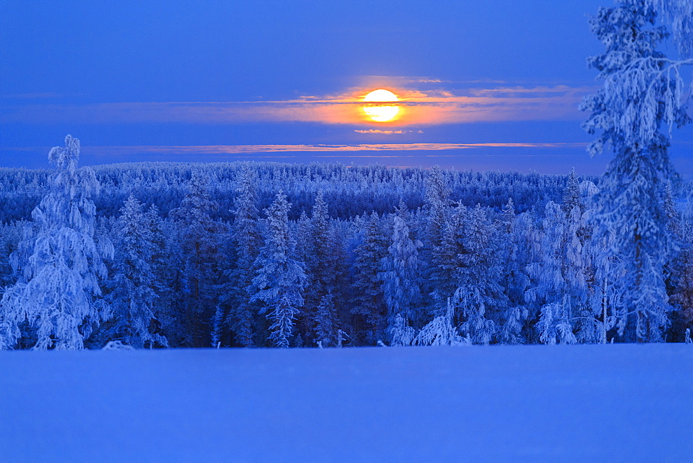 Lunar sunrise over the woods of Lapland, Hukanmaa/Kitkiojoki, Norbottens Ian, Lapland, Sweden, Scandinavia, Europe - 1269-22