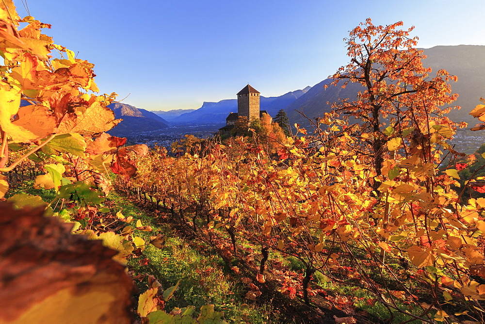 Sunset light illuminates the vineyards surrounding Tirolo Castle, Merano, Val Venosta, Alto Adige-Sudtirol, Italy, Europe - 1269-3