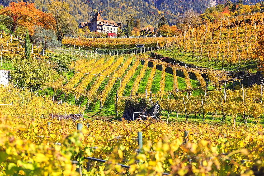 Labers Castle set in the middle of vineyards, Castel Labers, Merano, Val Venosta, Alto Adige-Sudtirol, Italy, Europe - 1269-6
