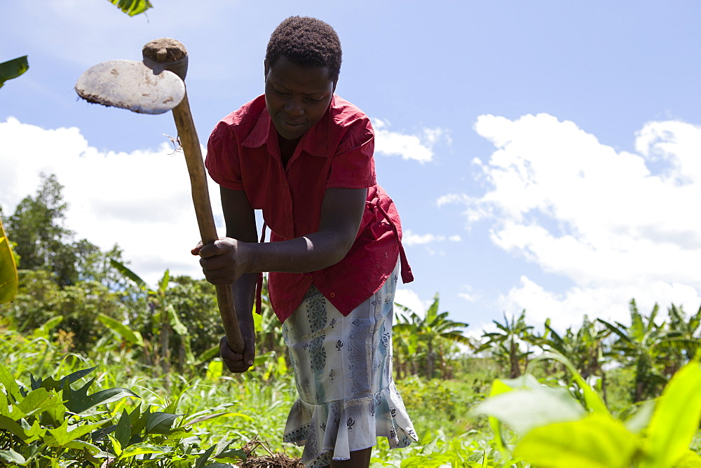 A woman using a hoe to weed vegetables, Uganda, Africa