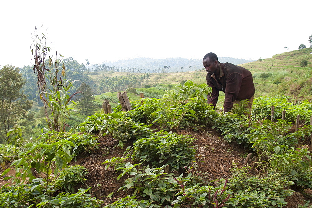 A man works on the kitchen garden at Ngwino Nawe, a centre for disabled children in the far south west of Rwanda, Africa