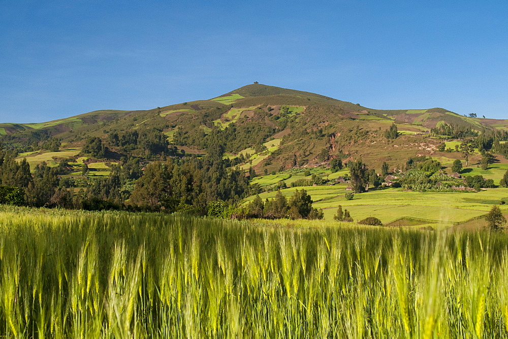 Crops growing with backdrop of rolling hills of Ethiopia. - 1270-18