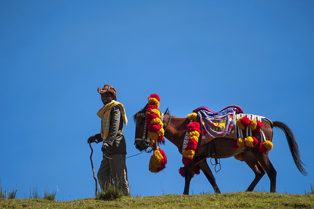 A man leads his horse with a colourful red and yellow traditional headdress along the brow of a hill, with blue sky behind them, Ethiopia, Africa - 1270-25