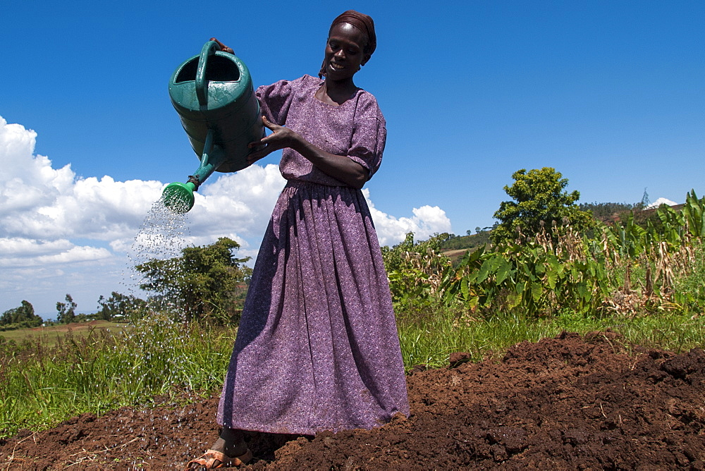 A woman waters her crops using a watering can, Ethiopia, Africa