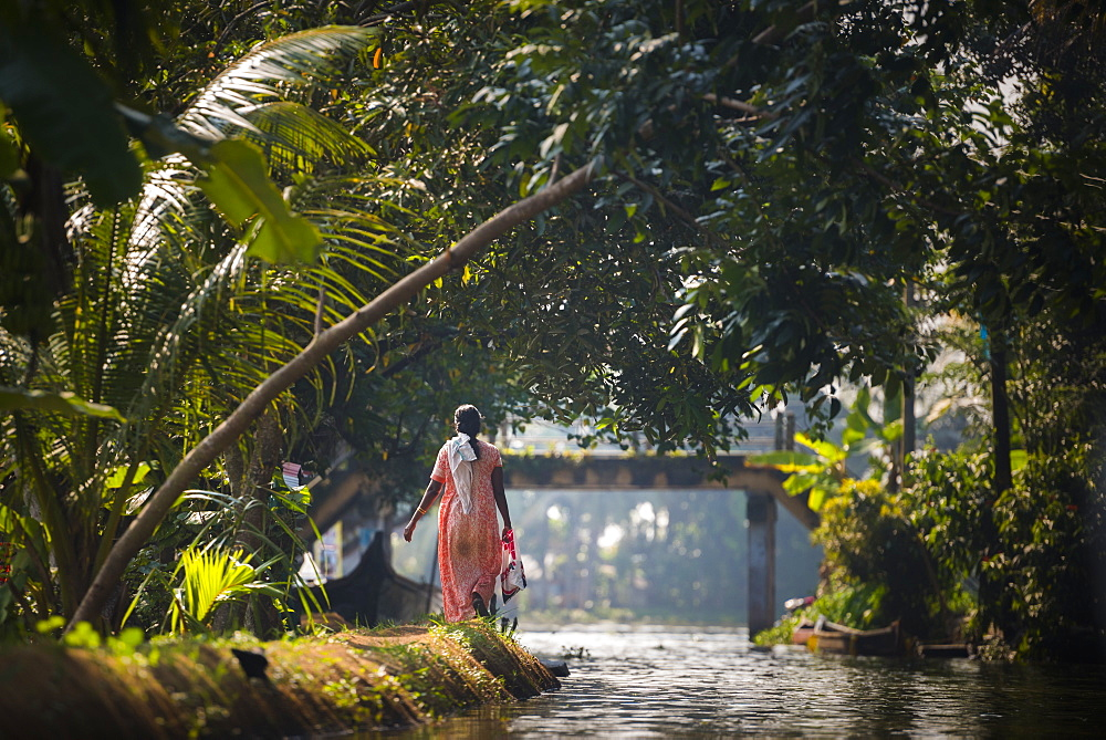Backwaters near Alleppey (Alappuzha), Kerala, India, Asia - 1272-172