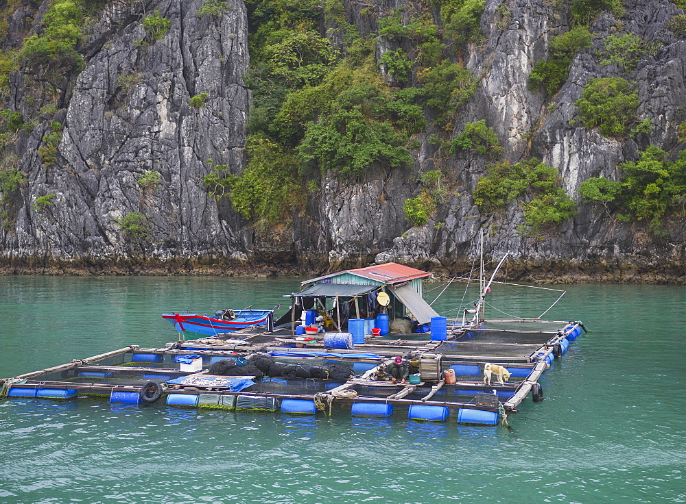 Floating fishing village in the Lan Ha Bay, Cat Ba Island, a typical Karst landscape in Vietnam, Indochina, Southeast Asia, Asia - 1275-79