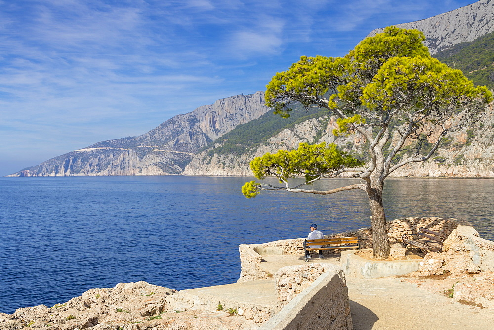 Single pine tree at a scenic lookout in Sveta Nedjelja on Hvar Island, Croatia, Europe