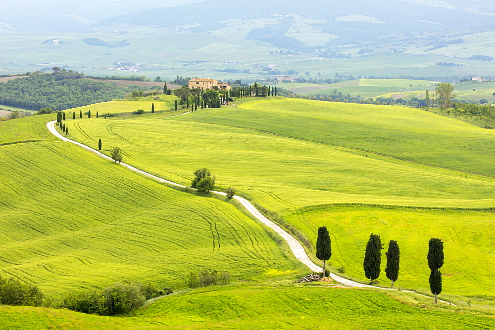 Cypress trees and green fields at Agriturismo Terrapille (Gladiator Villa) near Pienza in Tuscany, Italy - 1284-152