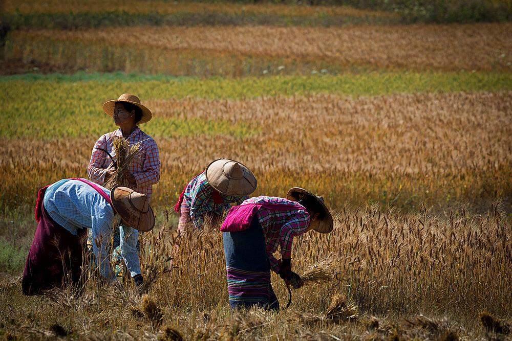 Kalaw - Birmanie - 1285-6
