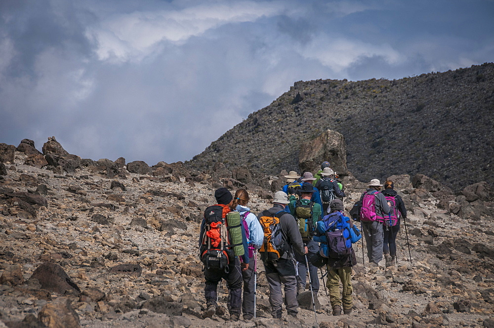 A group of trekkers with their local guide descending in Barranco Camp on the Machame Route on Mount Kilimanjaro, Tanzania, East Africa, Africa - 1287-52