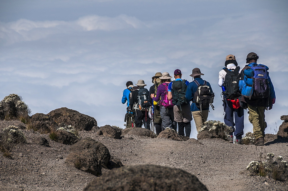 A group of Trekkers on the Machame Route on Mount Kilimanjaro descending towards the clouds, Tanzania, East Africa, Africa - 1287-55