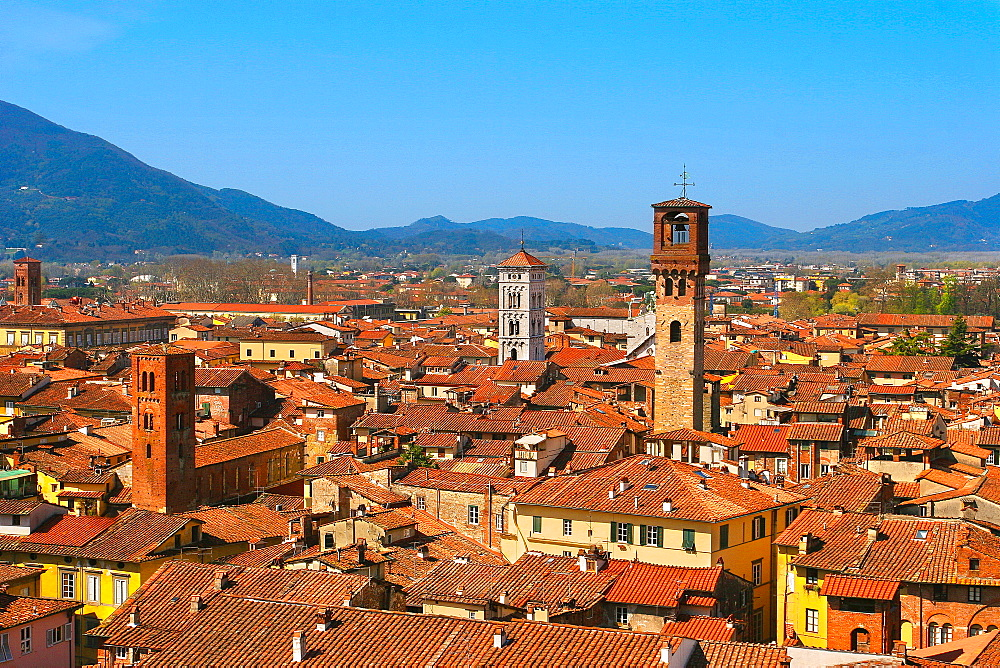 View from Palazzo Guinigi to the Torre delle Ore, Lucca, Tuscany, Italy, Europe