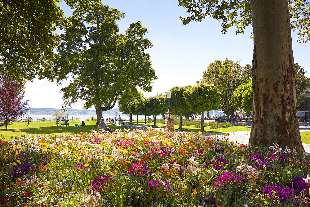 Beach promenade along Lake Constance in spring with flowers blooming, Uberlingen, Baden-Wurttemberg, Germany, Europe