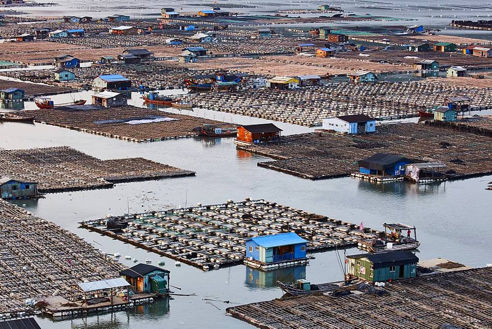 Floating village, Dong An, Fujian, China, Asia - 1294-44