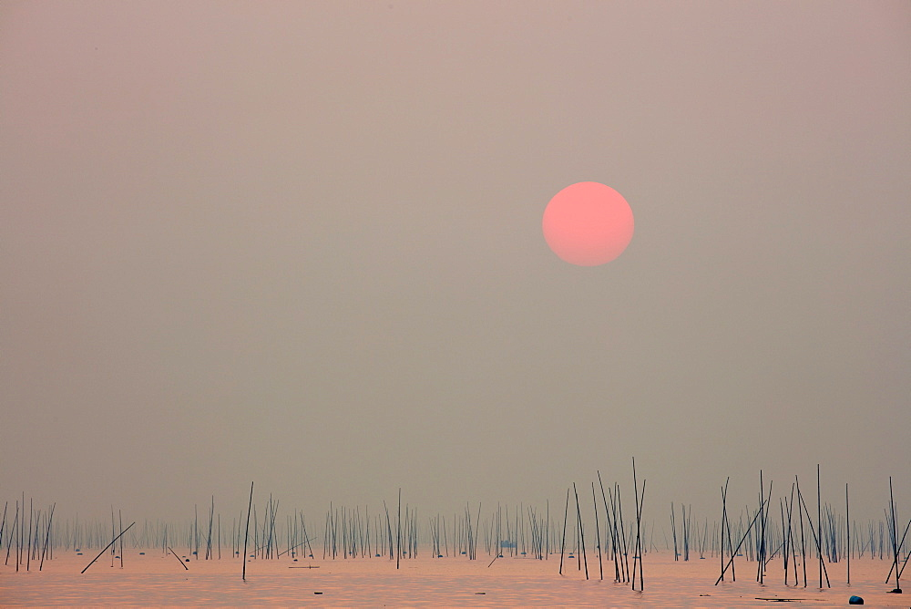 Xishan bay and beach at sunrise with bamboo sticks in the water, Fujian, China, Asia - 1294-55