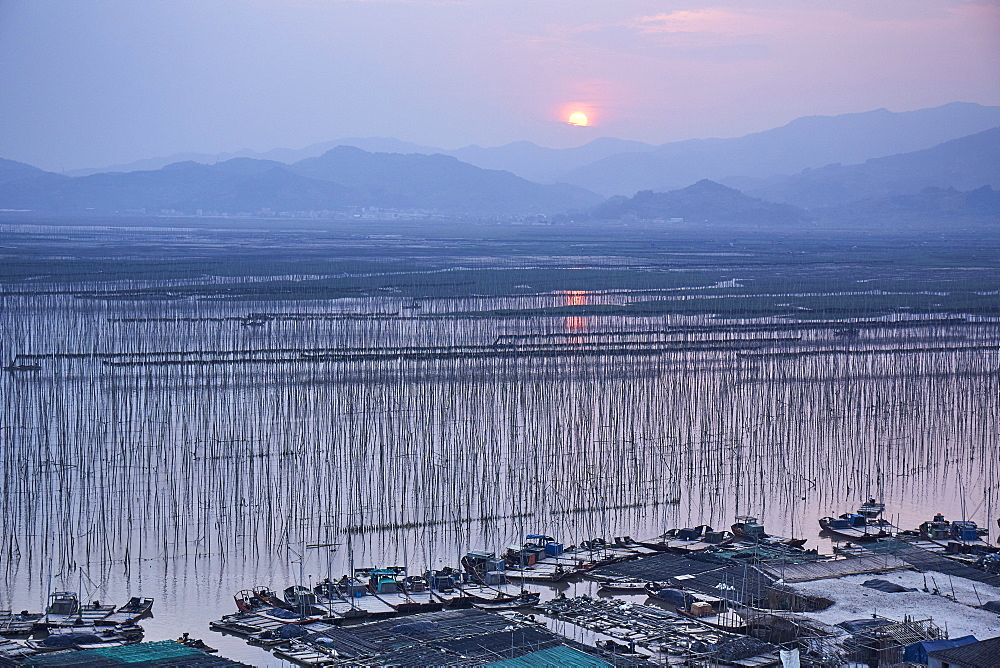 Sunset over Shajiang S Bay with endless rows of bamboo sticks to dry seeweed and kelp