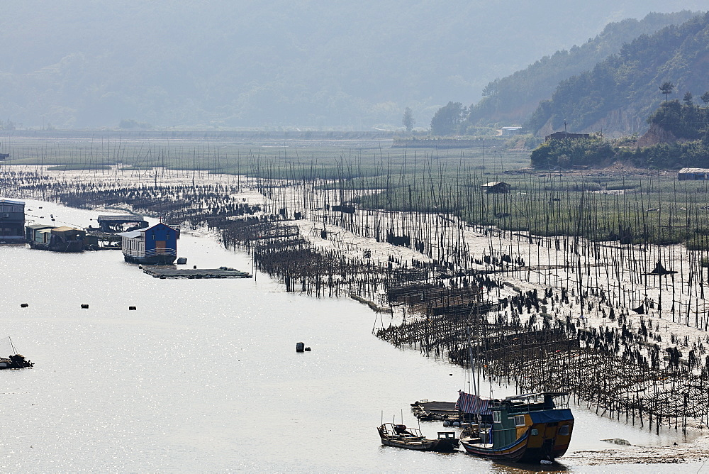 Floating village with aquaculture to cultivate seaweed and kelp, Fujian, China, Asia - 1294-60