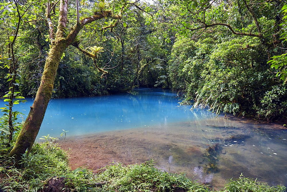 Rio Celeste in the Tenorio Volcano National Park  shows a bright blue colour like no other river due to a chemical reaction, Tenorio, Costa Rica, Central America - 1294-75