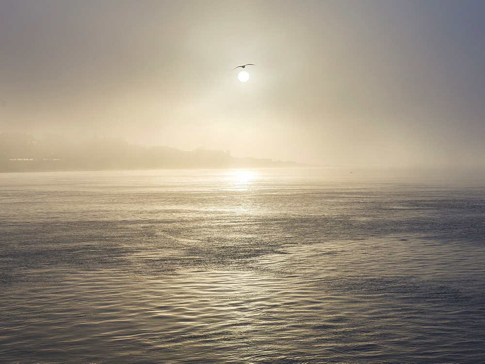 A seagull flies close to the sun as it shines through heavy fog on the sea front at Exmouth, Devon, England, United Kingdom, Europe