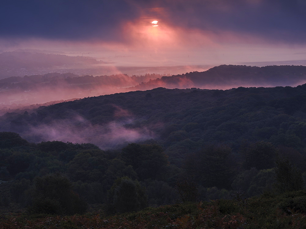 Breaking through cloud, the sun adds a pink hue to heavy mist over Yarner Wood, Dartmoor National Park, Bovey Tracey, Devon, England, United Kingdom, Europe - 1295-116