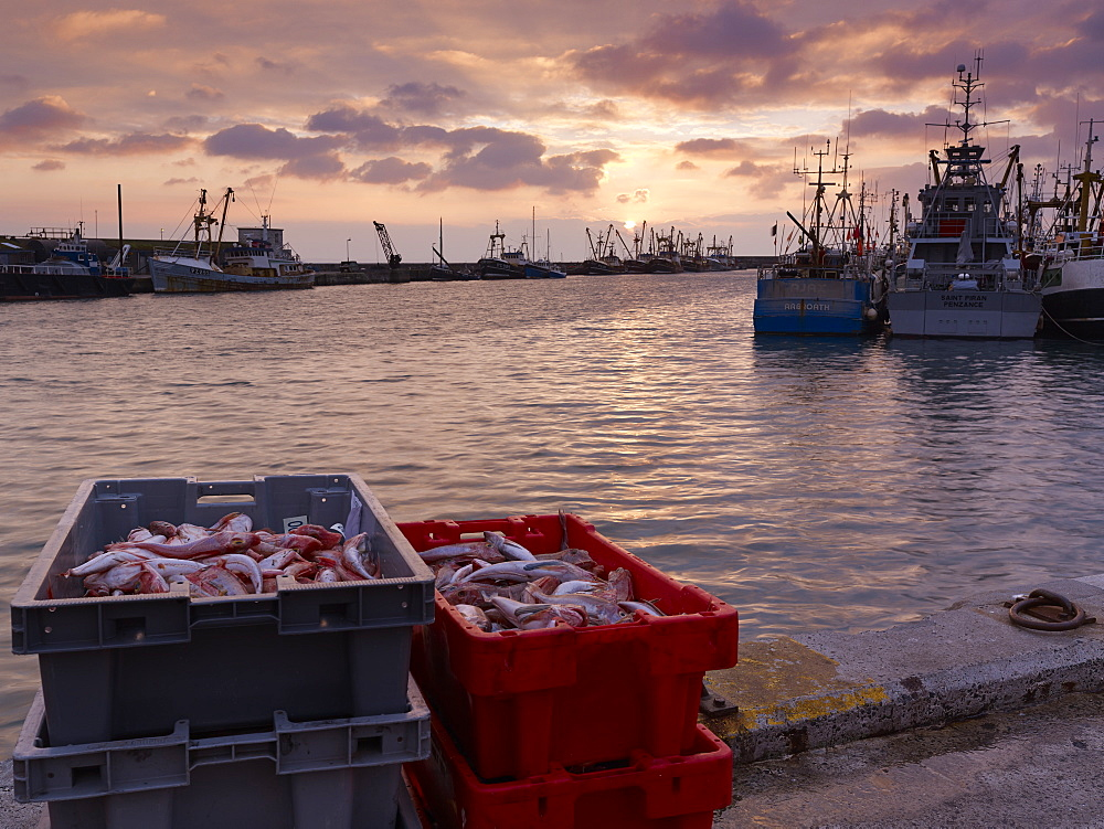 Boxes of Gurnard, just landed from a trawler on the harbourside as the sun rises over the fishing port of Newlyn in Cornwall, UK
