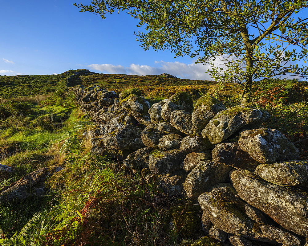 Sun on a stone wall on Holwell Down near Hound Tor, Dartmoor National Park, Bovey Tracey, Devon, England, United Kingdom, Europe - 1295-80