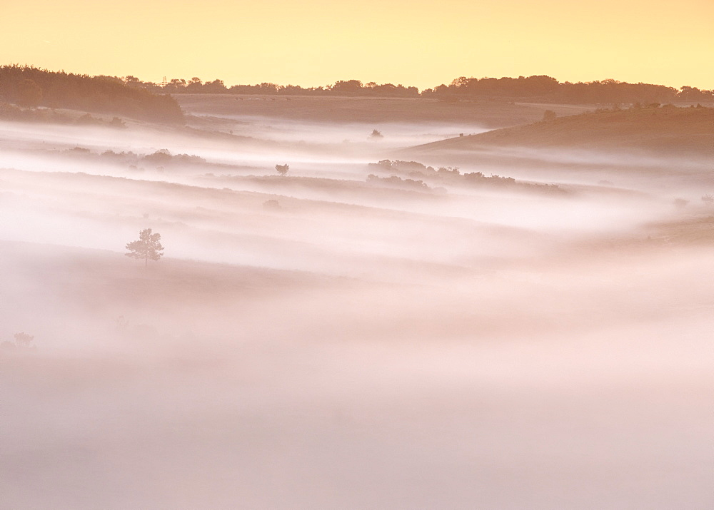 A huge blanket of dawn mist flows down the valley, leaving only trees and bushes rising above it, New Forest, Hampshire, England, United Kingdom, Europe - 1295-9