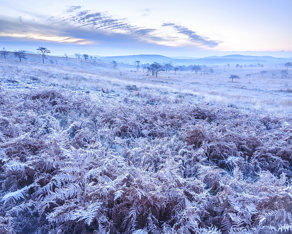 Heavy frost on bracken and a slight mist on the heathland of Woodbury Common, near Exmouth, Devon, England, United Kingdom, Europe - 1295-97