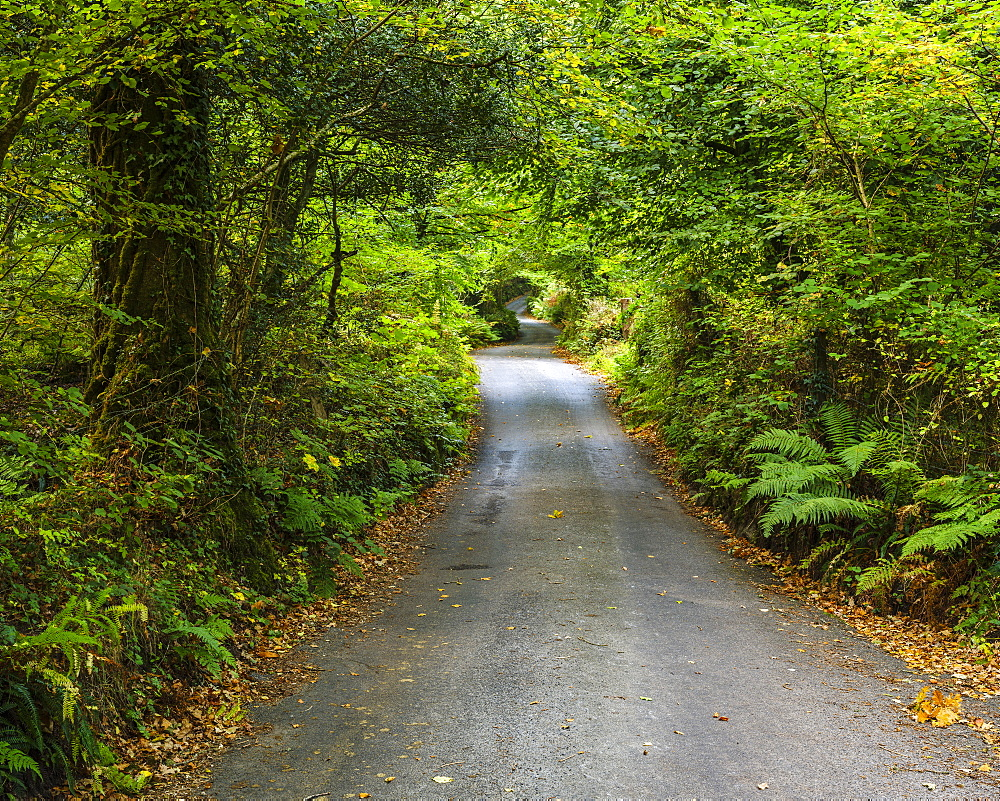 Autumn colours in the Devon lane leading to Beckaford Bridge, Dartmoor National Park, Bovey Tracey, Devon, England, United Kingdom, Europe - 1295-98