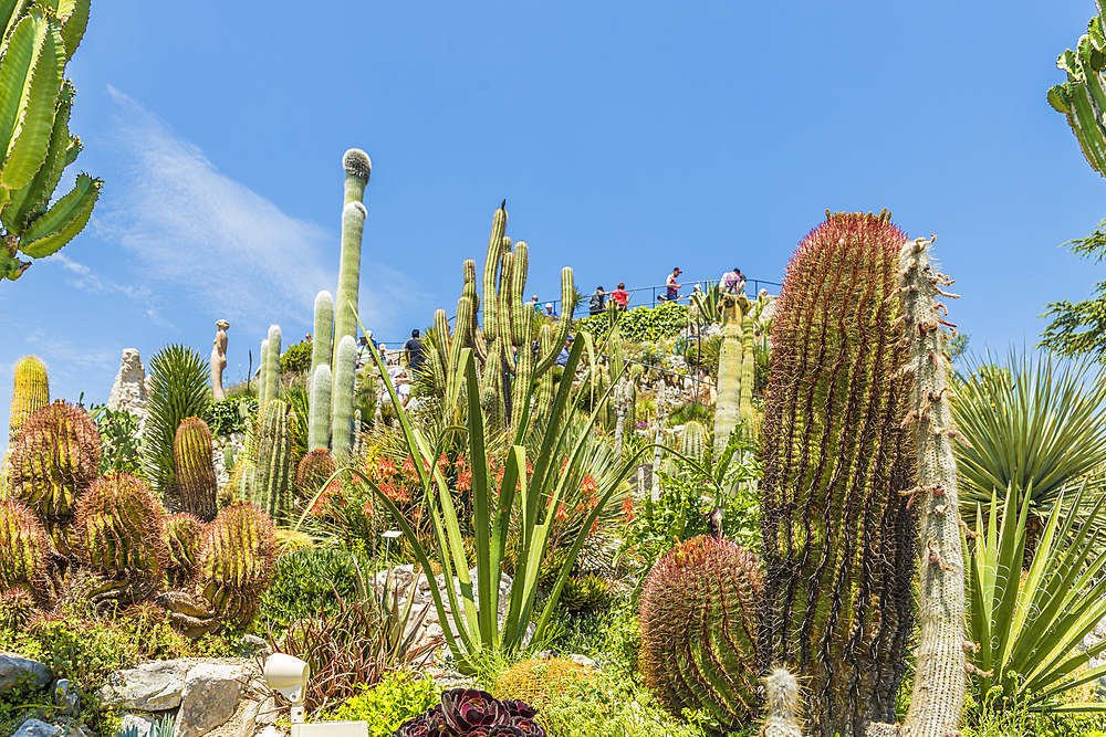 The Cactus garden in the Exotic Garden of Eze, Eze, Alpes Maritimes, Provence Alpes Cote D'Azur, French Riviera, France, Mediterranean, Europe