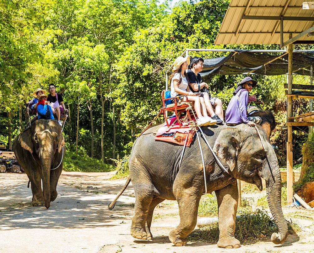 Tourists on an elephant ride in Phuket, Thailand, Southeast Asia, Asia