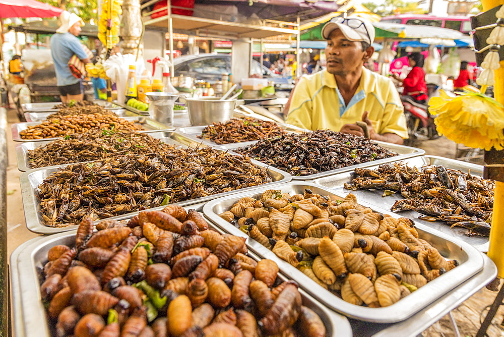 A stall selling various insects in the night market in Kamala in Phuket, Thailand, Southeast Asia, Asia.