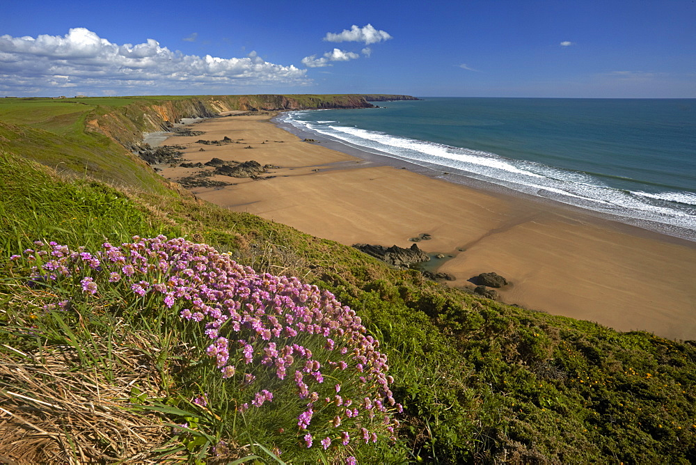 The wide sandy beach from the thrift covered cliff tops at Marloes, Pembrokeshire, Wales, United Kingdom, Europe