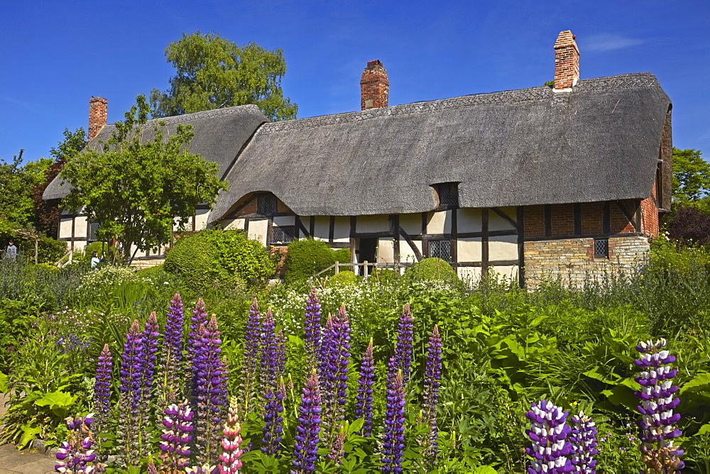 Anne Hathaway's cottage, Shottery, Stratford-upon-Avon, Warwickshire, England, United Kingdom, Europe