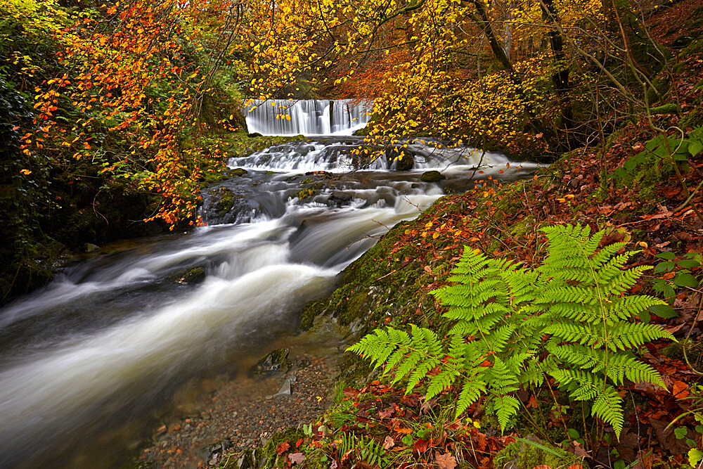 Autumn in Stock Ghyll near Ambleside, Lake District National Park, UNESCO World Heritage Site, Cumbria, England, United Kingdom, Europe - 1298-146