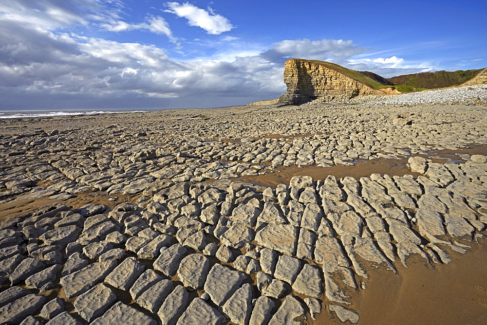 Exposed limestone at low tide at Nash Point on the Glamorgan Heritage Coast, Glamorgan, Wales, United Kingdom, Europe